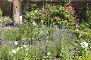 Traditional cottage garden plants